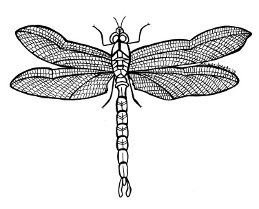 Dragonfly Ink