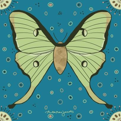 moon_moth